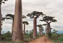 Photo of The flora of Madagascar