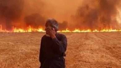 Photo of There is no left for the Syrians, neither the figs nor the olives, nor the faithful country. The fires eat up the rest of their dreams.