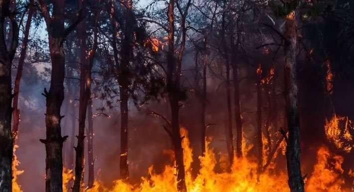 كارثةُ الحرائق, بروفايل نيوز - Profile News