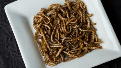 """Photo of The European Food Agency advises """"worms"""" !!"""