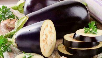 Eggplant diet to burn fat in a week, Arabic newspaper in Boston-USA-Profile News