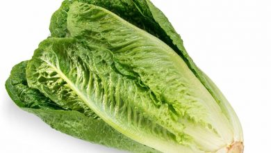 The benefits of lettuce are countless, Arabic newspaper in Boston-USA-Profile News
