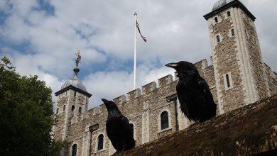 6 crows keep Great Britain!, Arabic newspaper in Boston-USA-Profile News