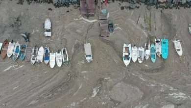 """Sea mucus"" affects the Marmara Sea, Arabic newspaper in Boston-USA-Profile News"