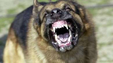 A massacre committed by a group of dogs against a child!, Arabic newspaper in Boston-USA-Profile News